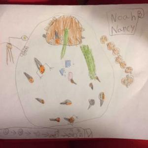 <strong>Projet L'élevage de rainettes à l'école</strong> <br>Créditphoto: Nancy Green