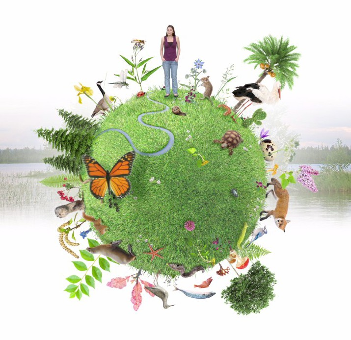 <strong>La biodiversité dans le monde</strong> <br>Créditphoto: Université du Québec à Chicoutimi