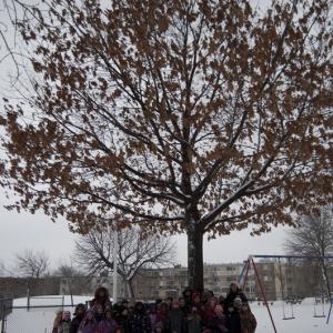 <strong>Projet Les chevaliers de l'environnement</strong> <br>Créditphoto: École St-Jean-de-la-Lande. Visite de notre arbre en hiver.