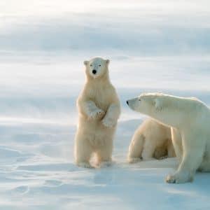 Zone arctique