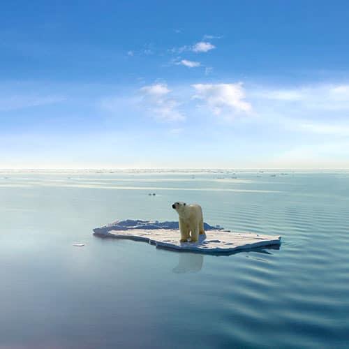 Menaces - Zone arctique