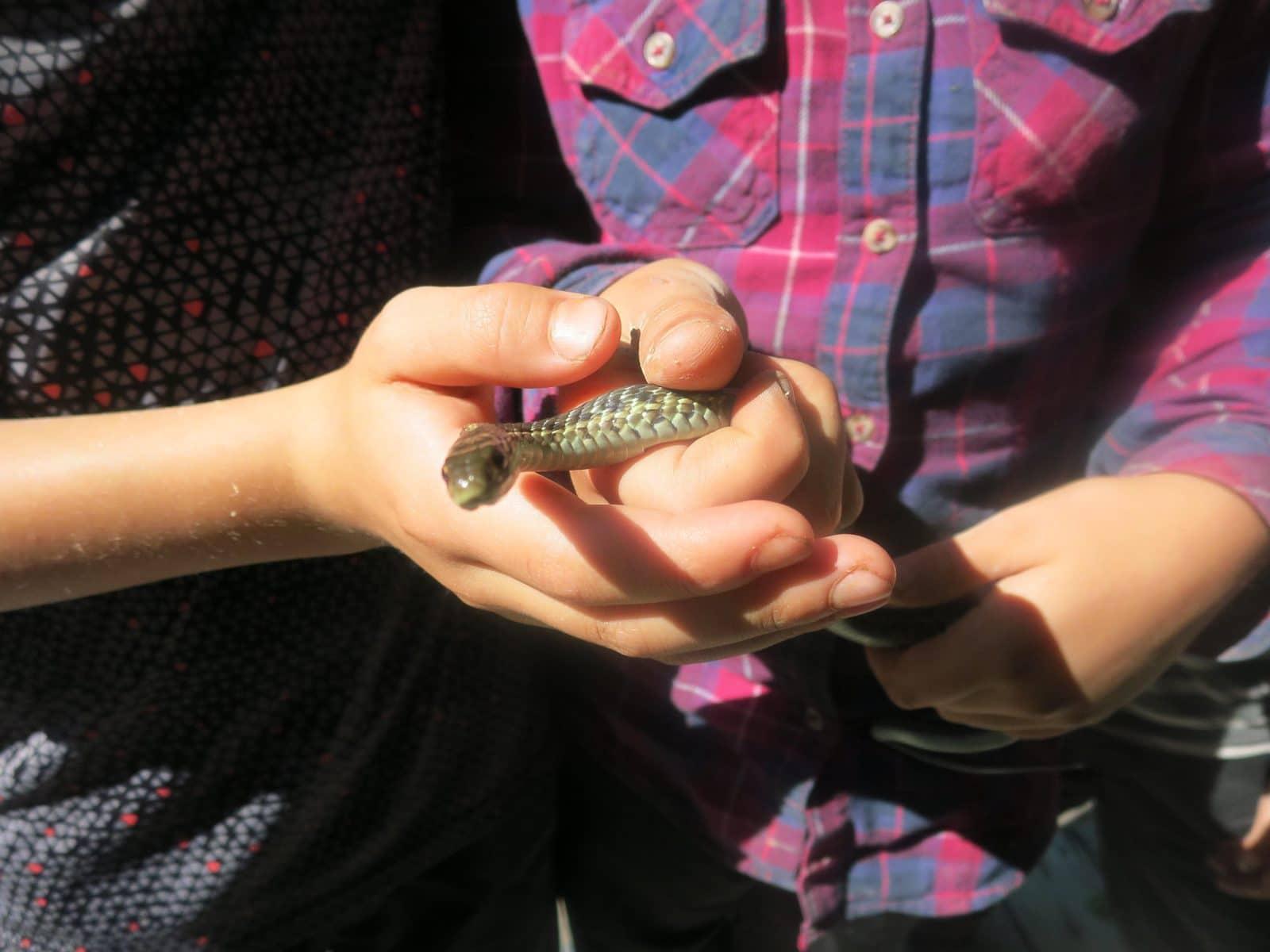 <strong>Wow ! Couleuvre rayée par Alice, 8 ans et Eliot, 9 ans</strong> <br>Créditphoto: Émilie Simard